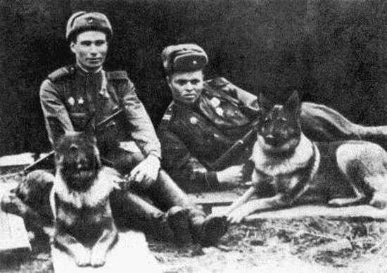 Псы войны. Удивительный факты о четырехлапых героях Великой Отечественной войны