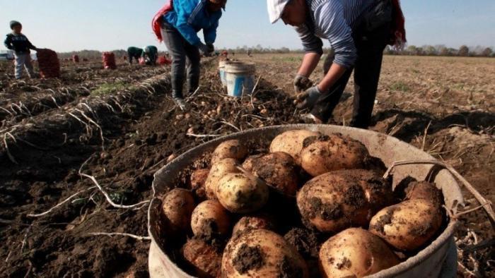 Закон об органических продуктах даст шанс добросовестным производителям