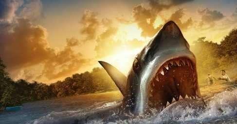 В США среди бела дня похитили из океанариума акулу