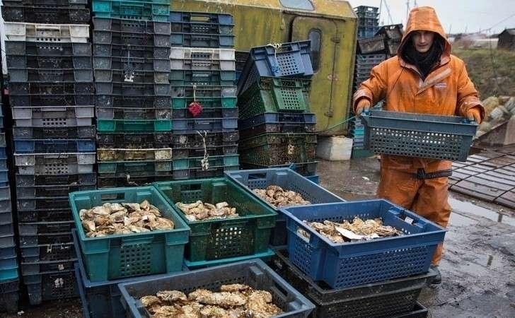 Крым увеличил производство устриц вчетыре раза