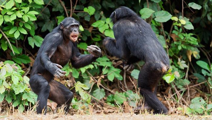 Животные, которые умеют и любят воевать почти как люди