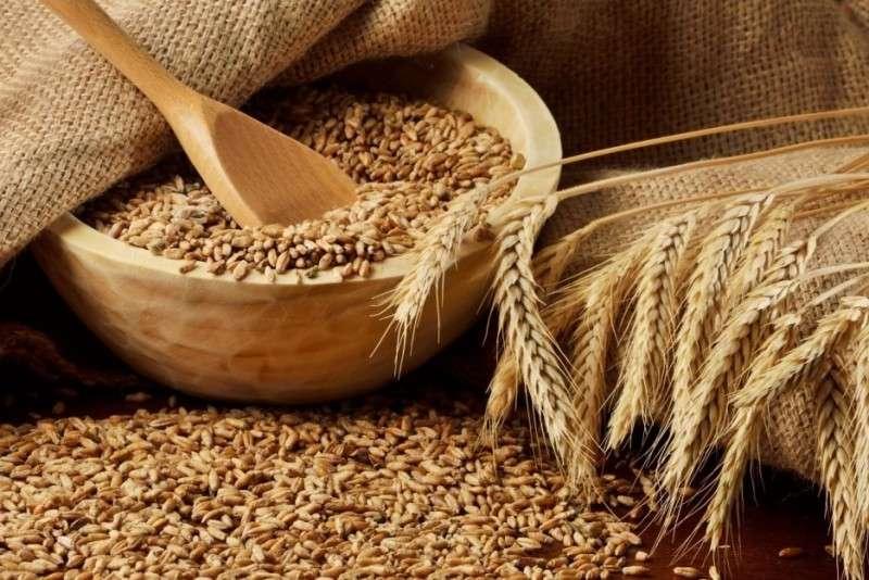 Какие страны Россия кормит зерном? (Пшеница)