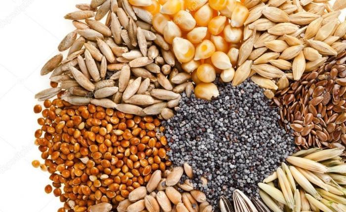 Какие страны Россия кормит зерном? (Кукуруза иячмень)