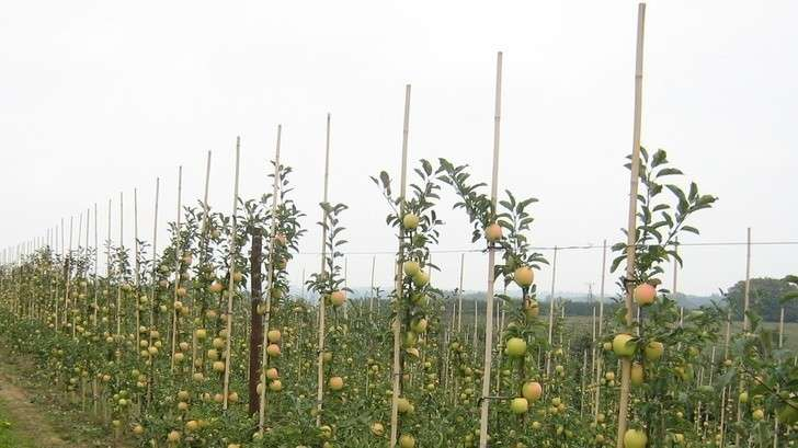 Первая тысяча гектаров новых садов высажена наКубани