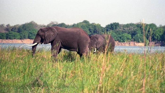 Удивительно разумные: почему слоны ведут себя как люди