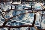 Панорама мировых валютных резервов: информация к размышлению