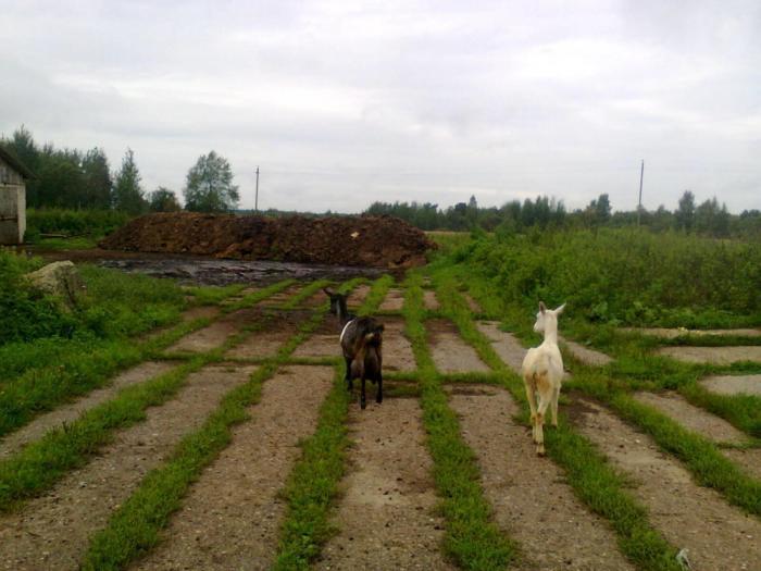 Россия!!! Нужны ли Тебе фермеры на самом деле!?