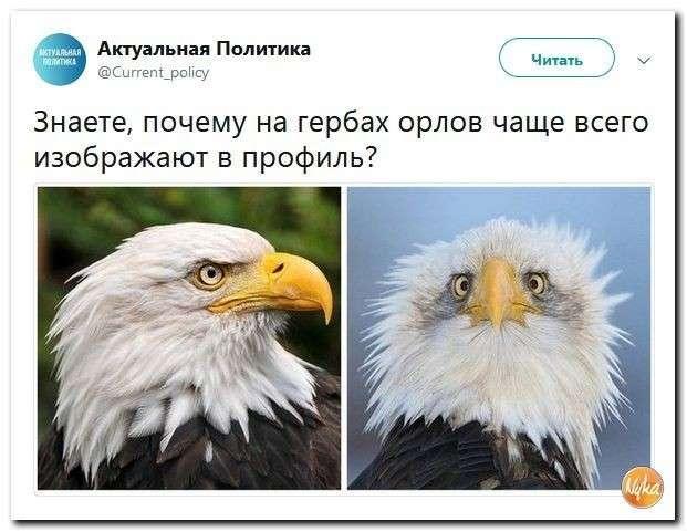 Юмор помогает нам пережить смуту: почему орла США всегда показывают в профиль?