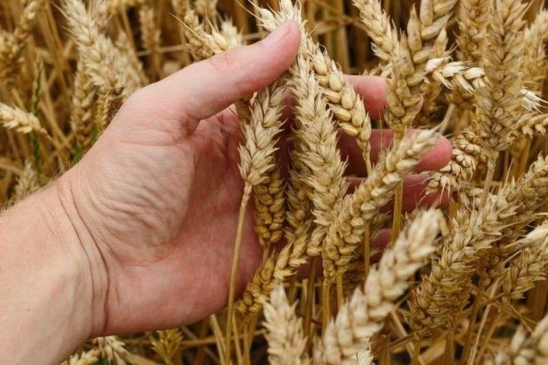 Сельхозэкстрим-2018: настоящая битва за урожай