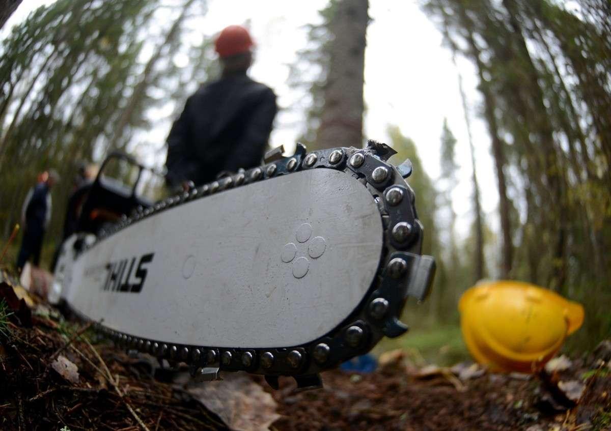 Петька Вальцман – безмозглый кондитер – распродаёт украинские леса