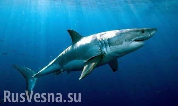 Дайвер загипнотизировал акулу и остался жив | Русская весна