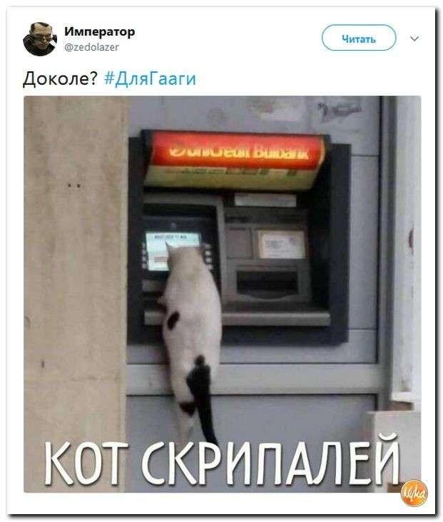 Юмор помогает пережить смуту: с Украины уже бегут даже коровы