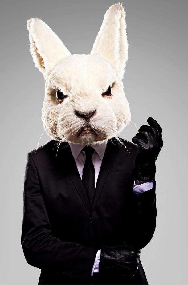 6. Британские ученые хотят скрестить кролика с человеком открытие, ученые