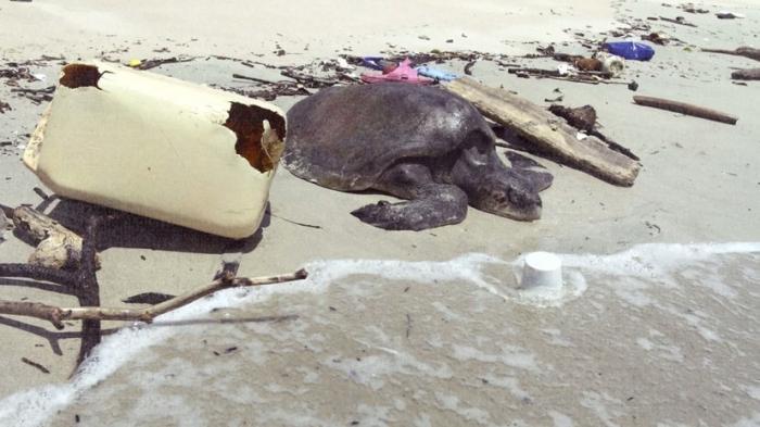 Житель Коста-Рики поймал огромную рыбу и ужаснулся увиденному