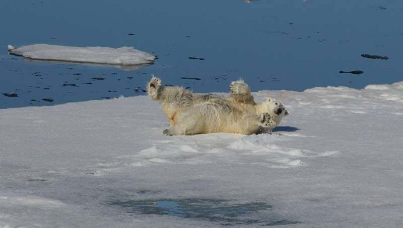Русская Арктика готовится стать центром туризма