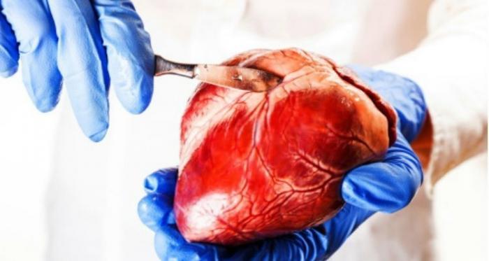 Геноцид. В паспорта будут вносить согласие на трансплантацию!