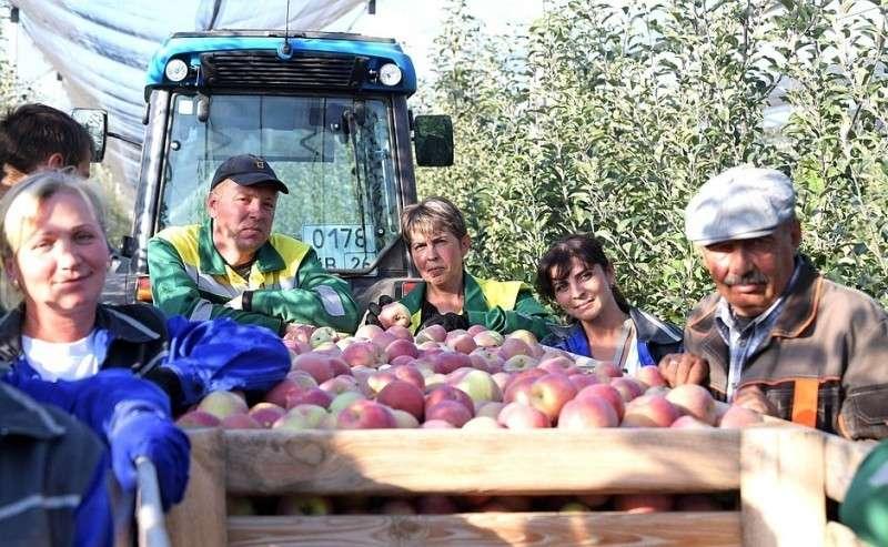 Работники сельскохозяйственного предприятия «Рассвет».