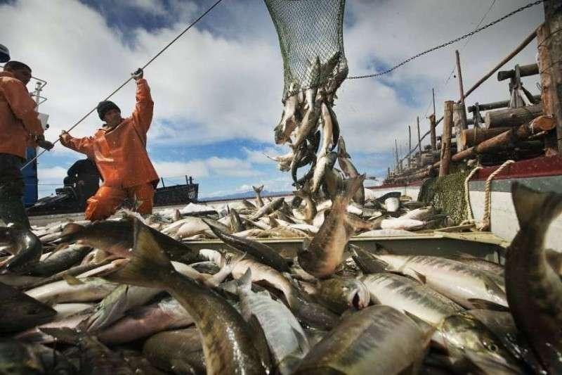 Рыбаки из Камчатки не могут вывезти свои рекордные уловы в центральную Россию