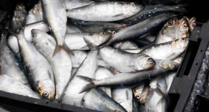 Севастопольские рыбаки жалуются, что их вытесняют коммерсанты из Астрахани