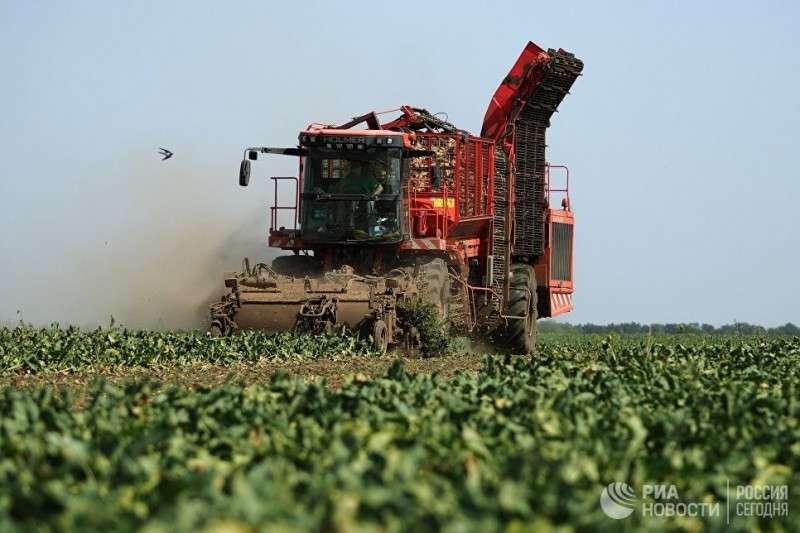 Россия резко снизила импорт сахара, молока и мяса. Переходим на всё своё
