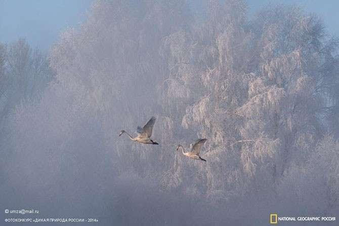 Лучшие фотографии дикой природы России