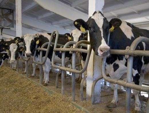 ВБашкирии попрограмме «500 ферм» введены вэксплуатацию девять объектов