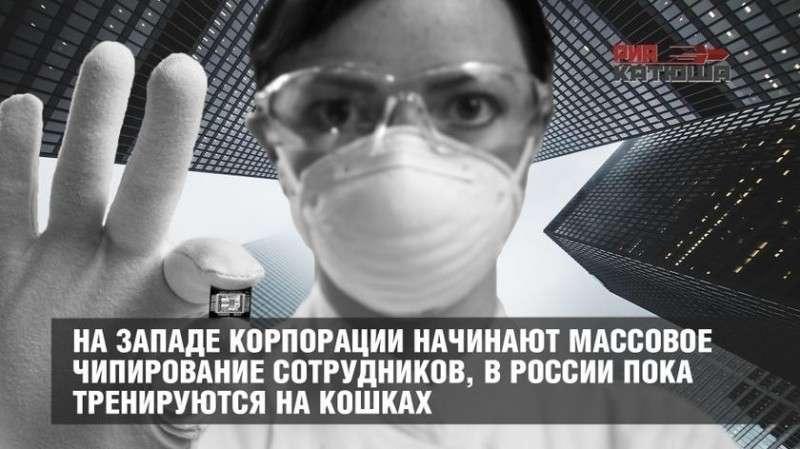 Западные корпорации начинают чипирование сотрудников, в России пока тренируются на кошках