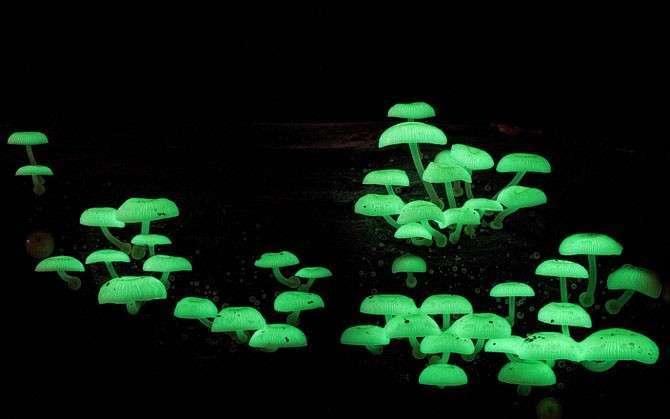 Путешествие в мир грибов