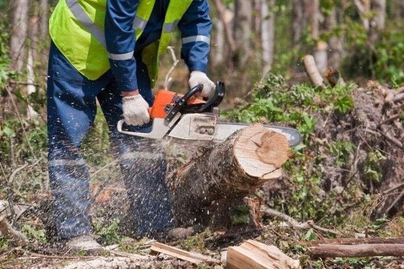 Литовские леса больше не принадлежат литовцам