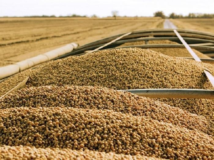 Нехватка продовольствия говорите? В США массово уничтожают сельхозпродукцию