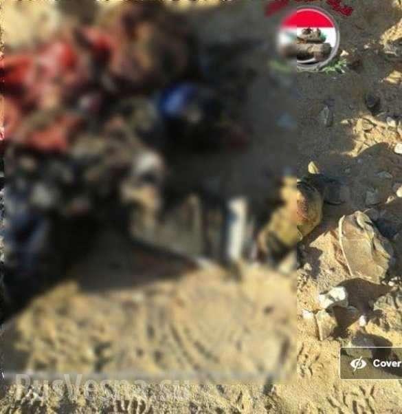 Сирия: у базы спецназа США уничтожены проамериканские боевики | Русская весна