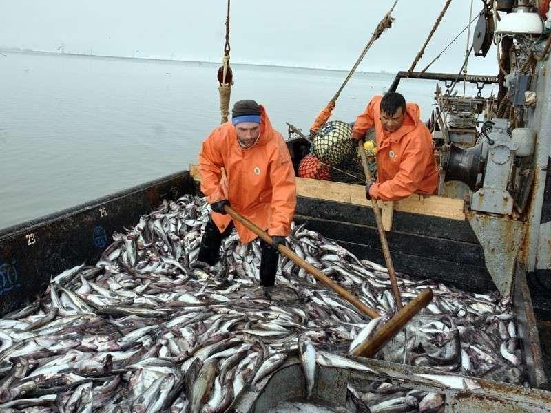 Санкции Запада привели русскую рыбную отрасль к рекордам