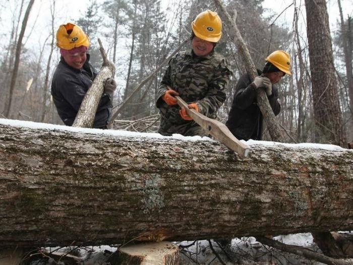 В Китае за такое ведение лесного бизнеса, как в Томской области, расстреливают