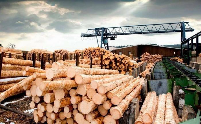 Китайцы навсегда избавят Карелию от «лишнего» леса