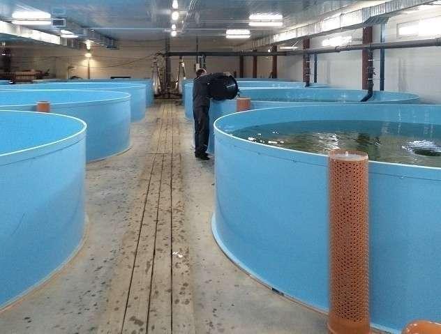 Вторая очередь рыбоводческого предприятия открыта вТамбовской области