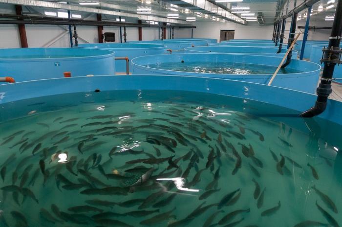 Тамбовская область. Вторая очередь рыбоводческого предприятия открыта