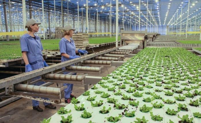 В России вдекабре 2018 открылось 46 новых предприятий агропрома