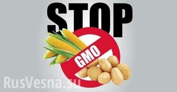 Россия прекратитимпорт продуктов сГМО | Русская весна
