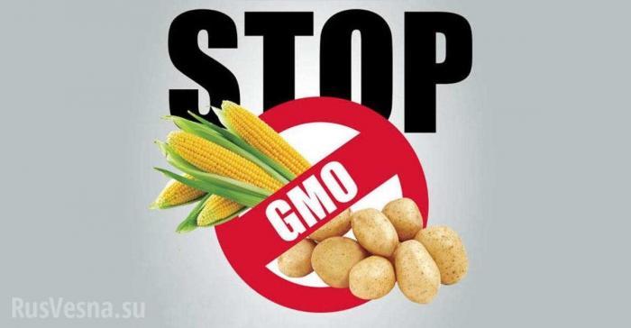 Россия прекратитимпорт ГМО в страну