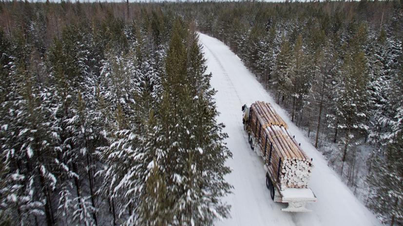 Матвиенко предложила временно остановить вывоз леса из России и проверить все договоры аренды леса