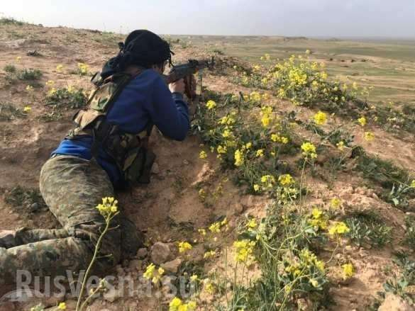 Сирия: Охота на крыс – в «зелёной пустыне» выжигают выживших боевиков (ВИДЕО) | Русская весна