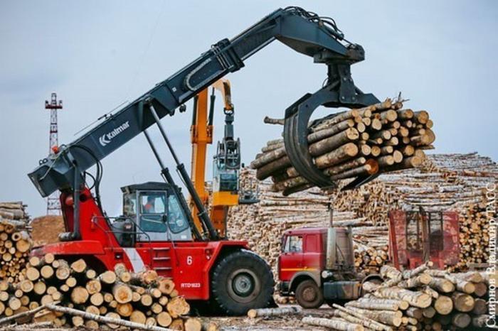 Незаконная вырубка лесов обходятся российской экономике слишком дорого