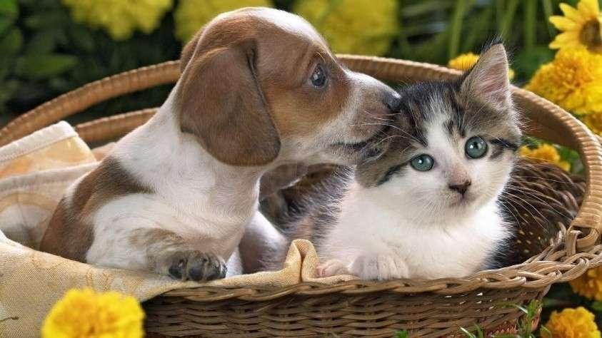 Картинки по запросу картинка животные собака