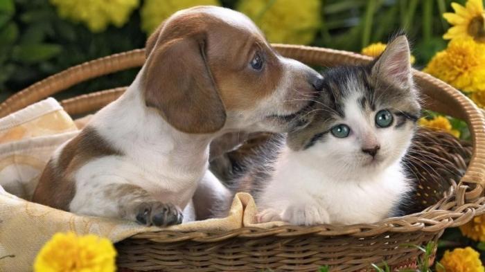 Зачем были созданы домашние и боевые животные: кошки, собаки, медведи, дельфины, касатки, грифоны