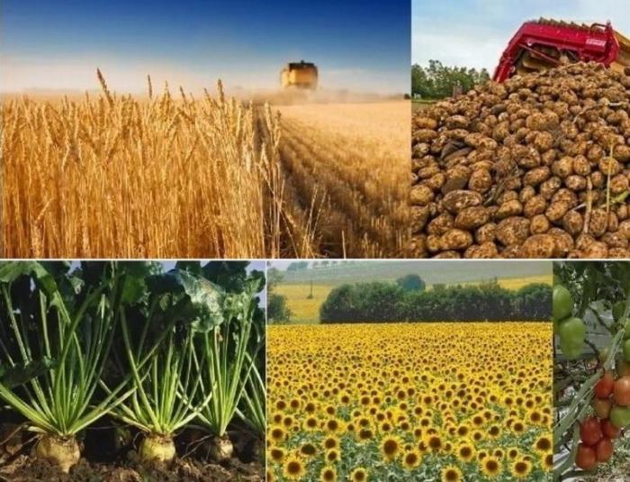 Российский АПК в 2018 году установил очередной рекорд экспорта.Часть 1: растениеводство