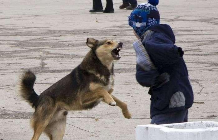 Что делать, если на вас напала собака: пошаговая инструкция, которая спасёт жизнь