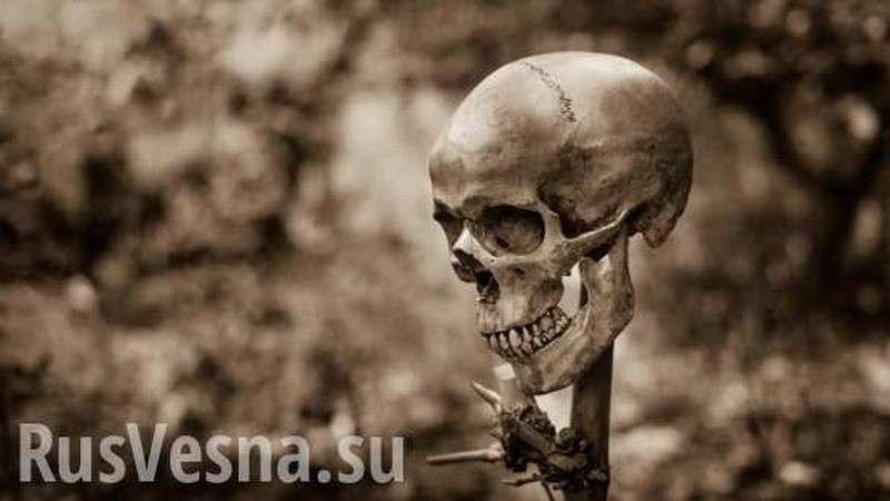 В Запорожской области произошла загадочная массовая гибель птиц и животных