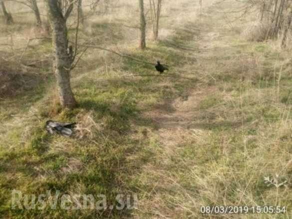 В Запорожской области произошла загадочная массовая гибель птиц и животных | Русская весна