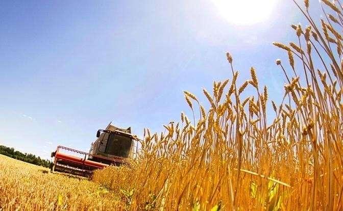 На фото: уборка пшеницы в Октябрьском районе Ростовской области
