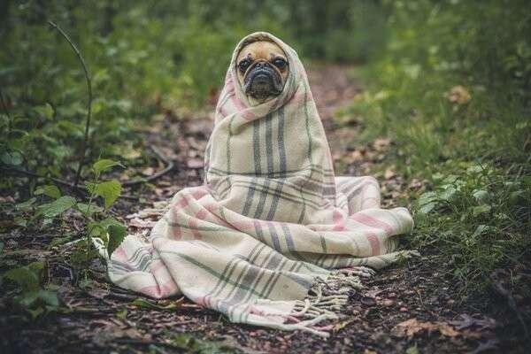 В России люди не мерзнут зимой, а даже наоборот.